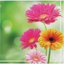 GERBERA GLORY BEVERAGE NAPKINS - 16 COUNT Thumbnail