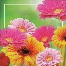 GERBERA GLORY LUNCH NAPKINS - 16 COUNT Thumbnail